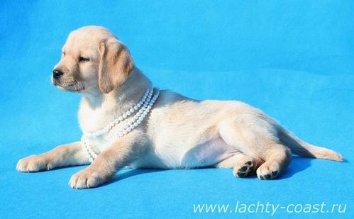 договор вязки собаки за щенками | Мир собак